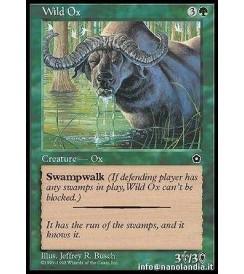 Wild Ox